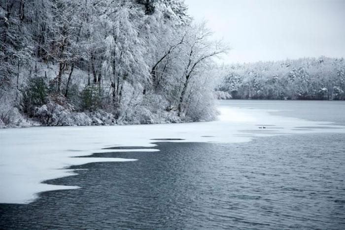 瓦尔登湖畔的树木覆上新雪。 PHOTOGRAPH BY TIM LAMAN