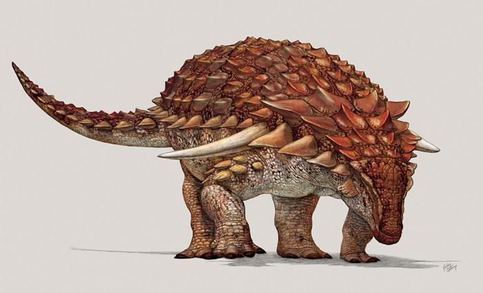 """发现身披""""迷彩服""""的新甲龙种类Borealopelta markmitchelli 存在反荫蔽"""