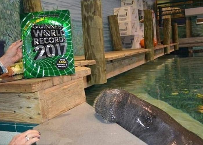 斯努堤是全球最年老的圈养海牛。