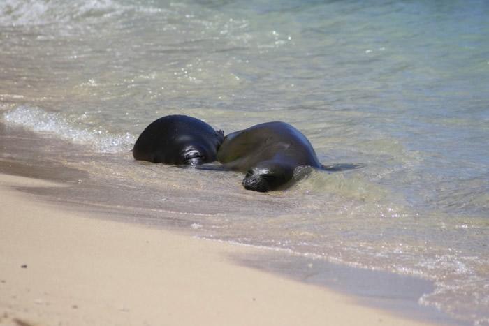 凯玛纳(左)与母亲在沙滩上休息。