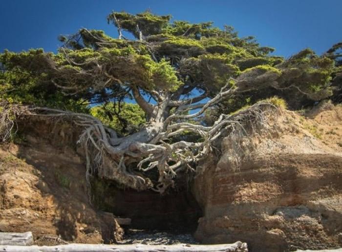 大树似乎知道只要坚持,便总有办法生存。
