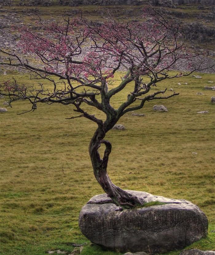 从石头伸展出来的树木,带点美态。