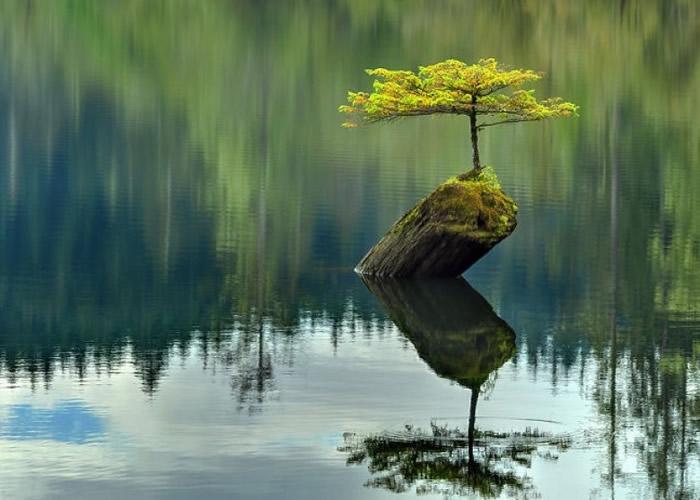 在湖中的一棵小树无惧孤独。