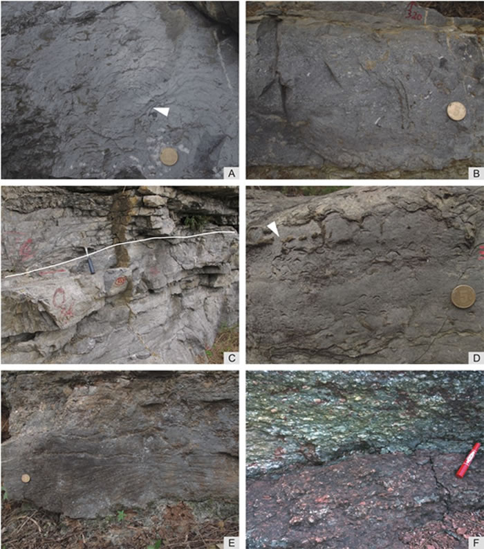 野外照片,(A)和(B)分别是红花园组的微生物岩和岩屑灰岩,属于淹没前沉积;(C)示意紫台组和下伏红花园组的界线(白线);(D)、(E)和(F)是紫台组淹没后沉