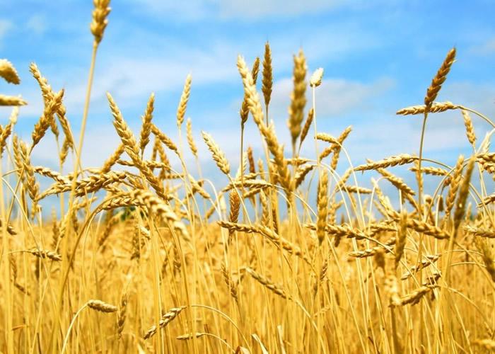 二氧化碳或会破坏植物中的蛋白质。