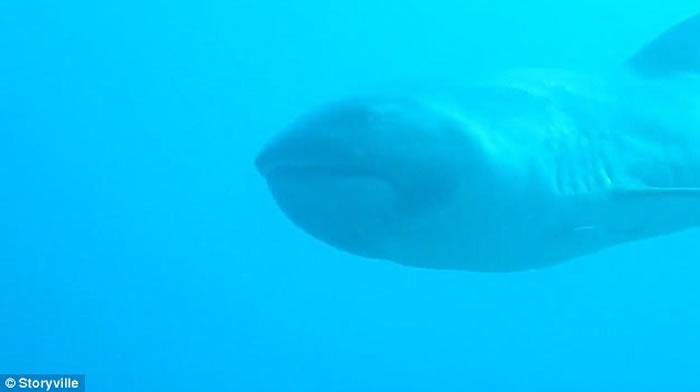 """英国女游客在印尼科莫多岛潜水时遇上稀有物种""""巨口鲨"""""""