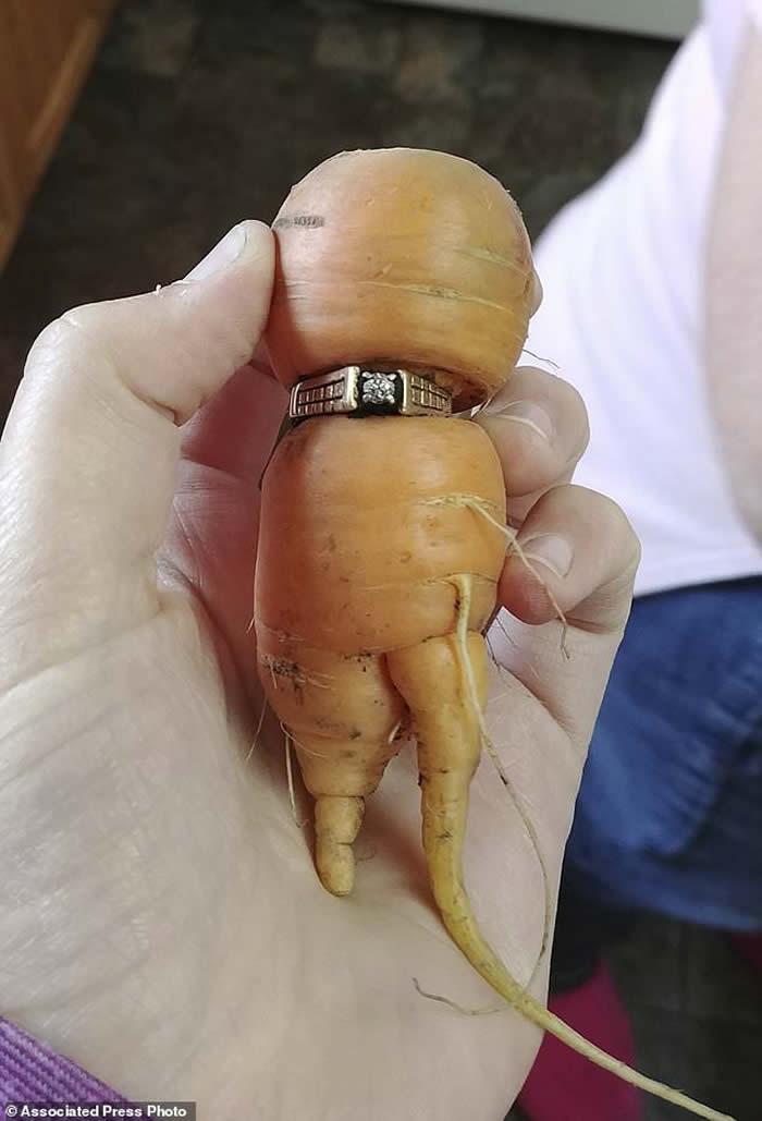 加拿大84岁阿婆求婚钻戒失踪13年 在农场红萝卜身上找到