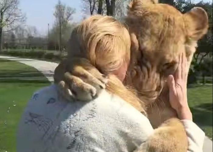 斯洛伐克动物园两头狮子重遇多年前的女主人激动相拥