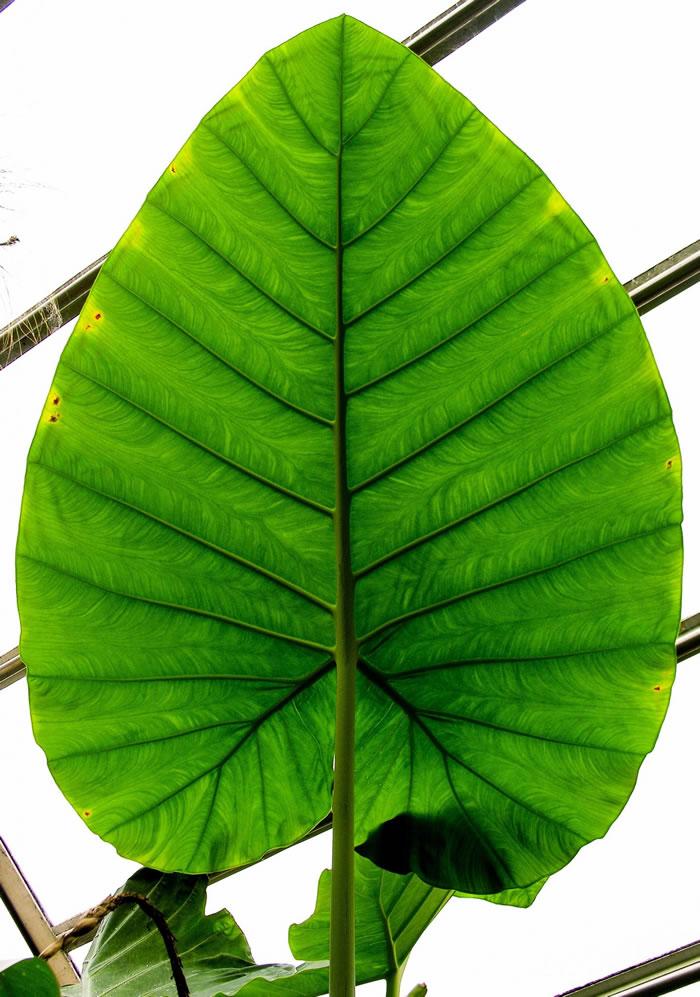 昼夜温差会影响植物