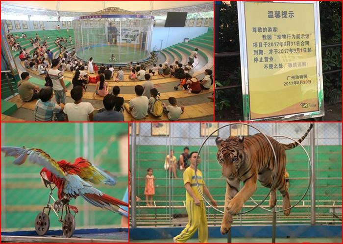 经营24年的广州动物园马戏表演正式结束 将改建科普展馆