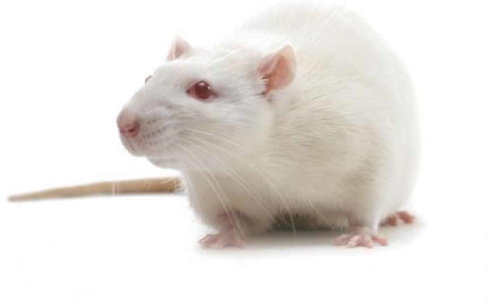 科学家发现一种化合物能在小鼠的哮喘模型中引发持久的气道松弛并防止气道高反应性