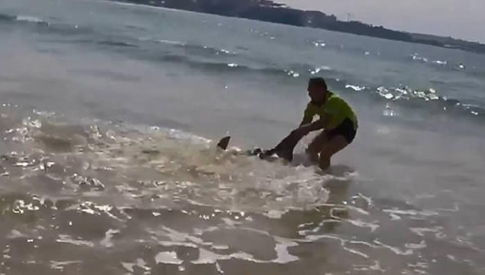 澳洲悉尼男子在沙滩拯救受伤搁浅大白鲨 拉鱼尾送回大海