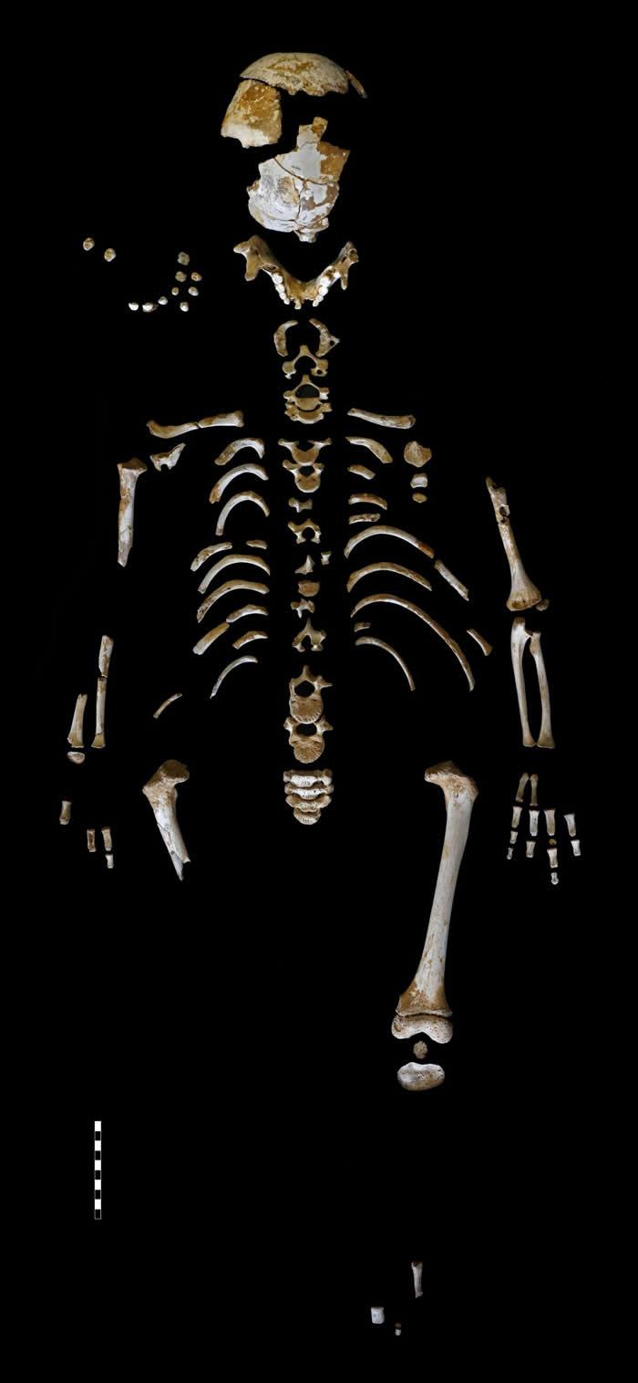 尼安德特人的骨骼揭示我们已灭绝表亲的生长模式