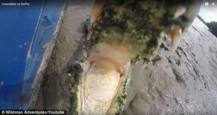 澳洲北领地河中巨大咸水鳄狂噬渔夫摄像机