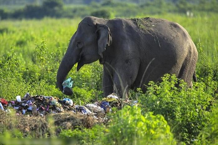 大象把垃圾送入口。