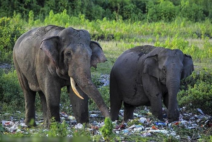 大小象一起翻找垃圾。
