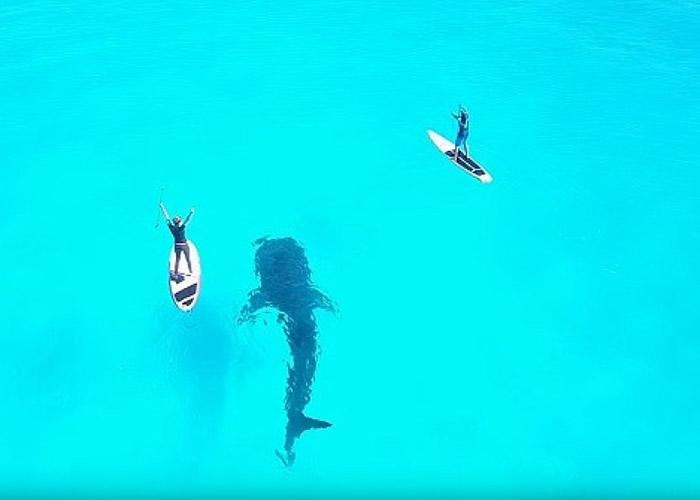 墨西哥坎昆岛泳客鲸鲨同行戏水
