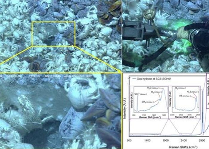 """与深海冷泉化能生物群落共生的裸露在海底的""""可燃冰""""。"""