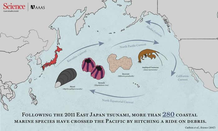 海啸加上许多人造碎片如何触发海洋生物大迁徙
