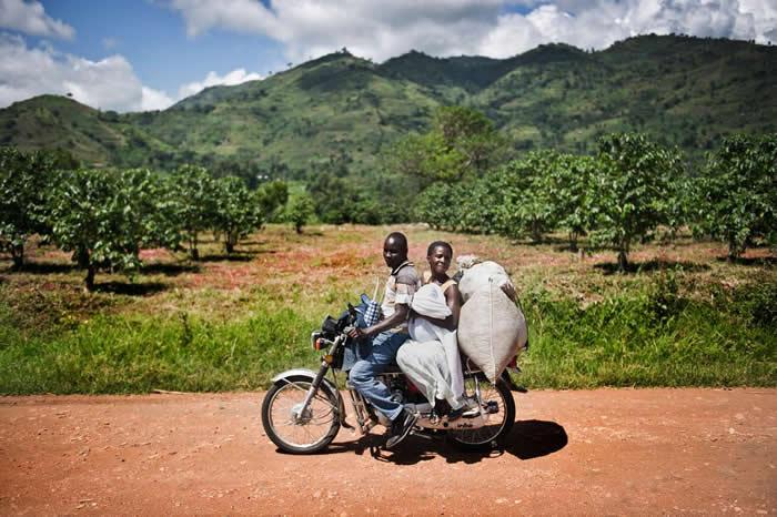 在乌干达,大多数的咖啡农民是小农,他们主要藉由卖咖啡豆赚取每年的现金收入。 PHOTOGRAPH BY SVEN TORFINN, PANOS PICTURES