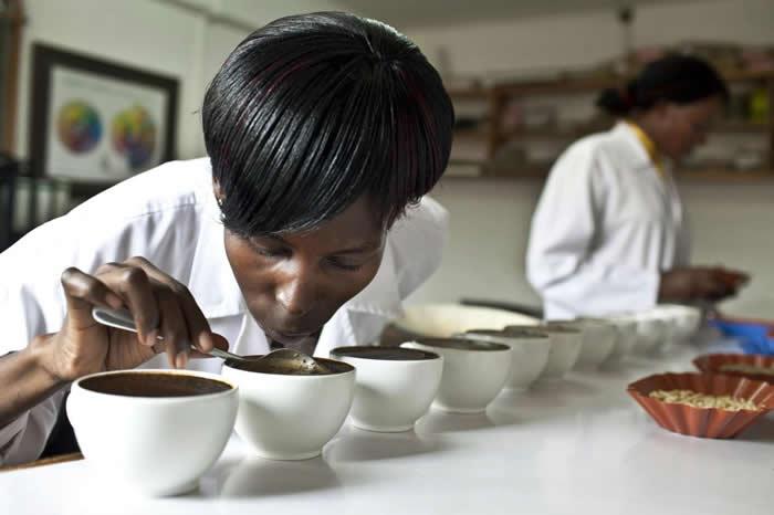 咖啡的品质是透过「杯测」程序来评估,这里位于乌干达坎帕拉的Good African Coffee公司。 PHOTOGRAPH BY JONATHAN TORGO