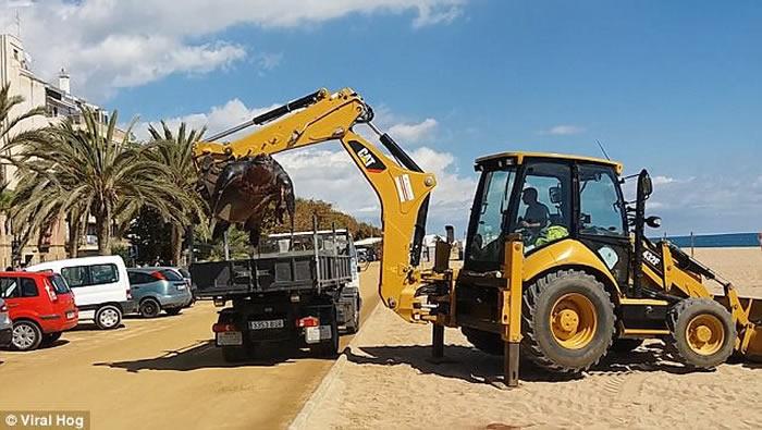 西班牙巴塞罗那沙滩巨型棱皮龟搁浅