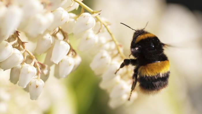 新研究指全球75%的蜂蜜含有对人类健康有害的神经毒素