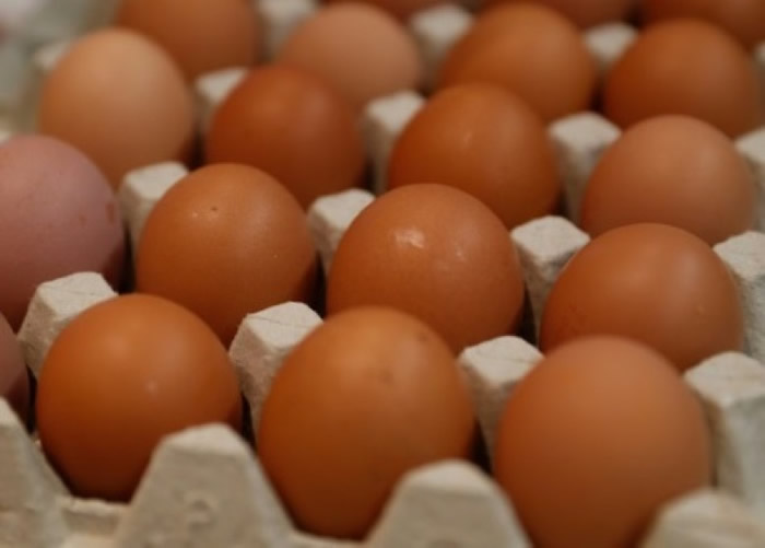 研究人员利用基因改造母鸡制平价药物。(资料图片)