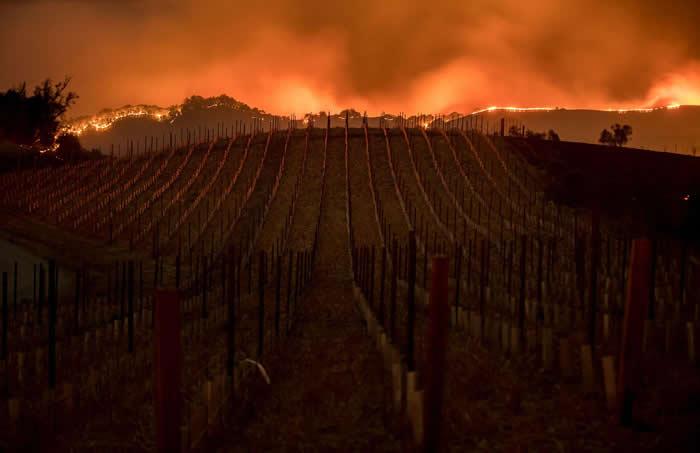 野火沿着加州纳帕葡萄园后方的山脊延烧。美国有许多最佳的酿酒厂坐落于纳帕郡。 PHOTOGRAPH BY NOAH BERGER, SAN FRANCISCO C