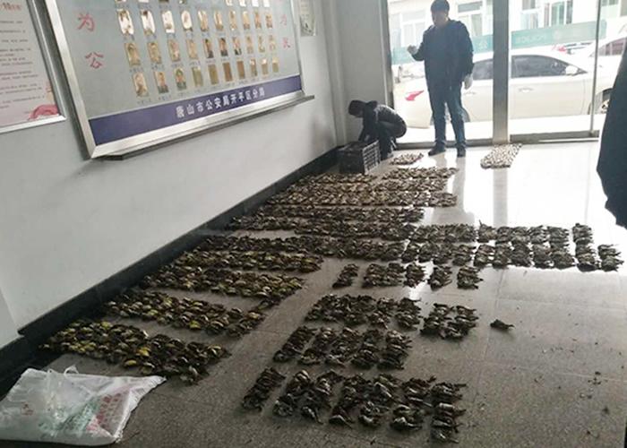 唐山警方周一查获大批野生鸟。