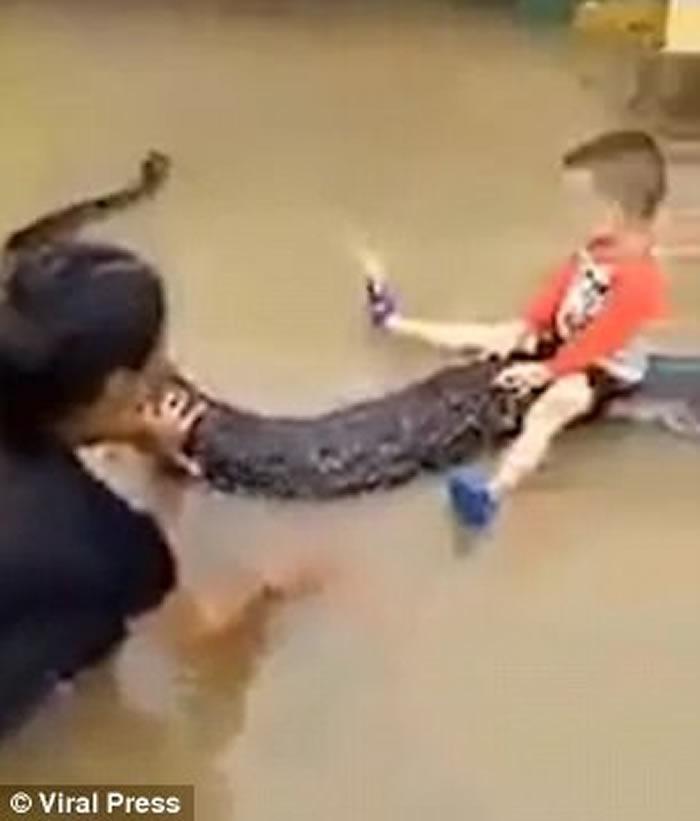 越南清化省3岁男童骑在6公尺长蟒蛇身上