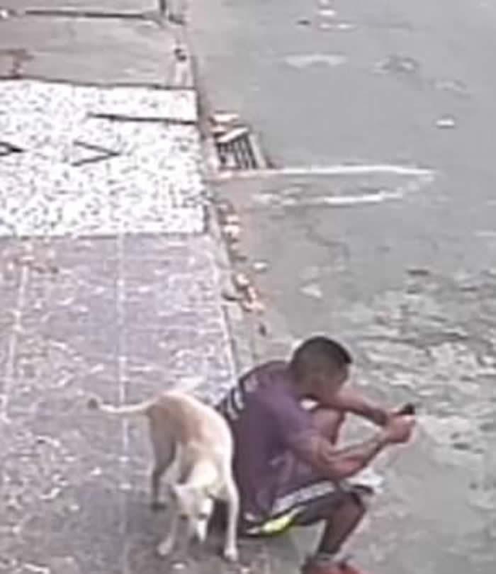 超级搞笑:巴西男子坐在街边玩手机 白色流浪狗在其身后抬腿就撒尿
