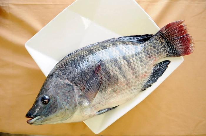 台湾鲷是台湾养殖业产量最多的鱼种