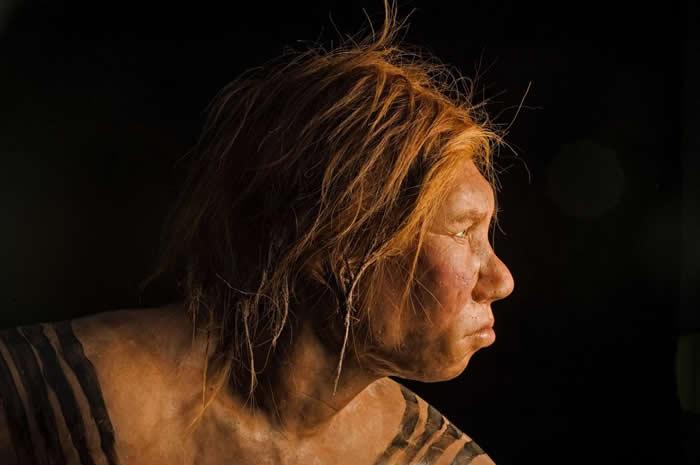 这个2008揭露的尼安德特人女性模型,是第一个运用古代DNA证据的重建模型。 PHOTOGRAPH BY JOE MCNALLY, NATIONAL GEOGR