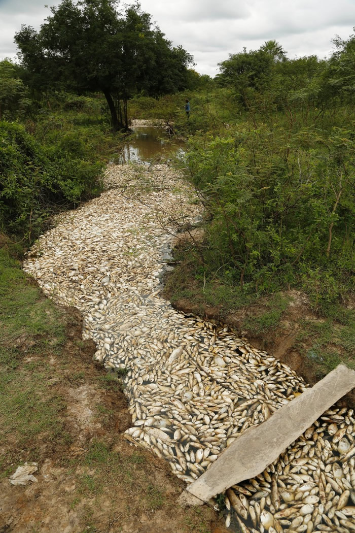 巴拉圭阿耶斯镇河道发现有数以千计鱼类离奇死亡