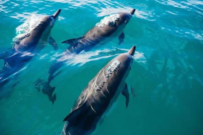研究指出海豚与鲸鱼拥有和人类一样的群体模式