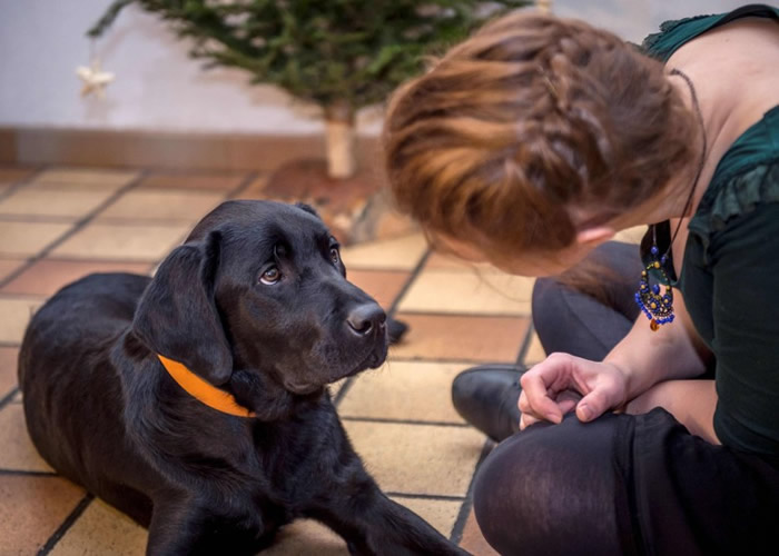 英国朴茨茅斯大学最新研究发现狗表现出来的喜怒哀乐其实是希望和人类沟通
