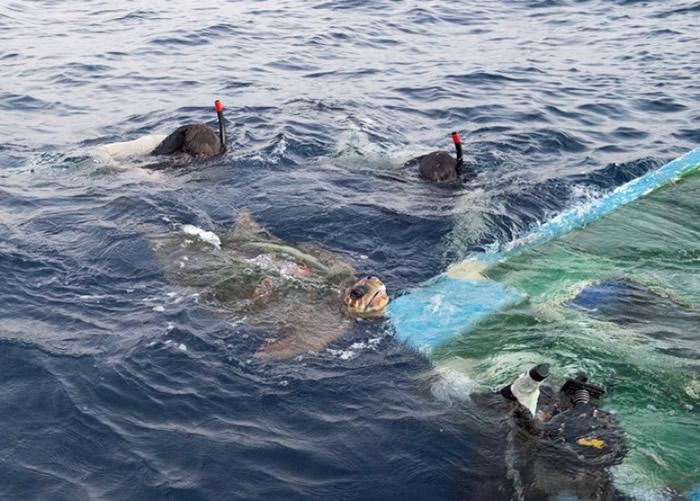 船员使用器材救出海龟。