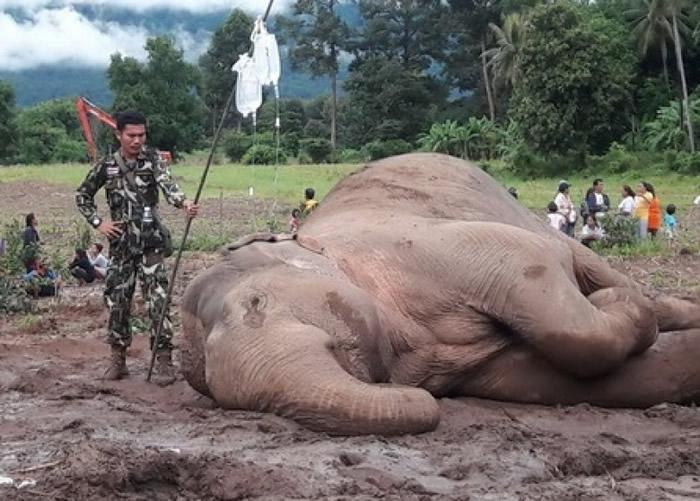 泰国野象失足堕河 获救援人员合力拉回岸上