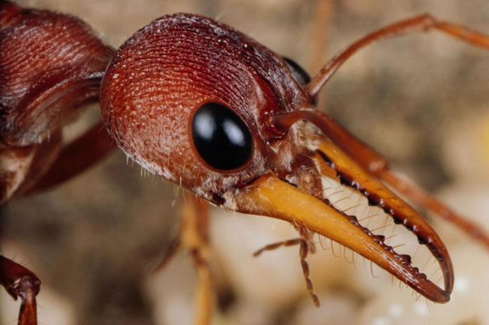 蚂蚁和其他昆虫会使用它们强而有力的下颚来清除巢穴里的尸体