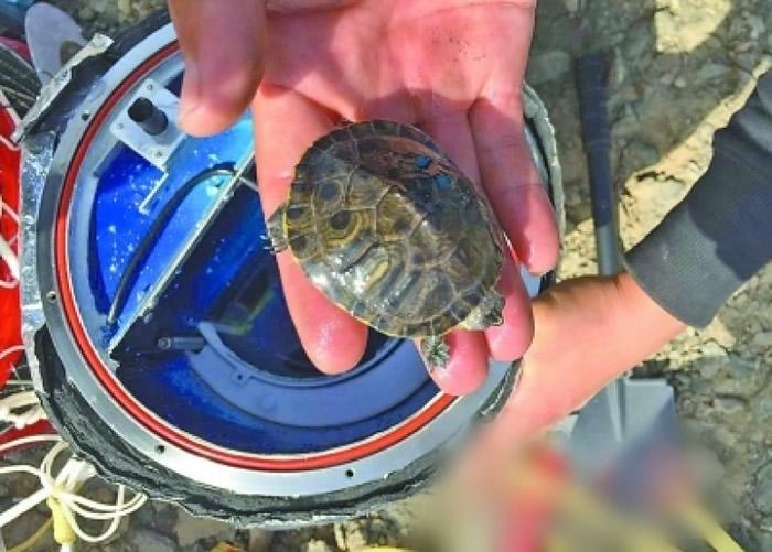 舱内搭载了一只活体乌龟。