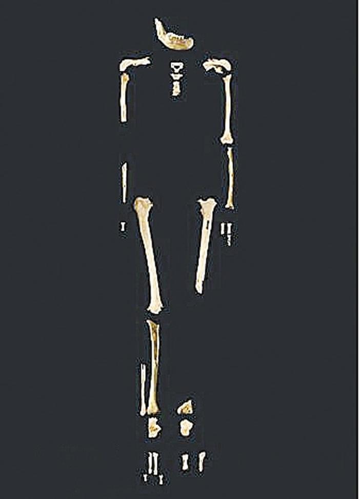 田园洞人骨架图