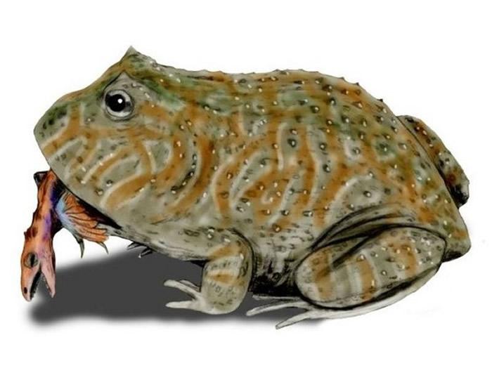 神秘的「魔鬼蛙」约保龄球大小,以小恐龙为食。