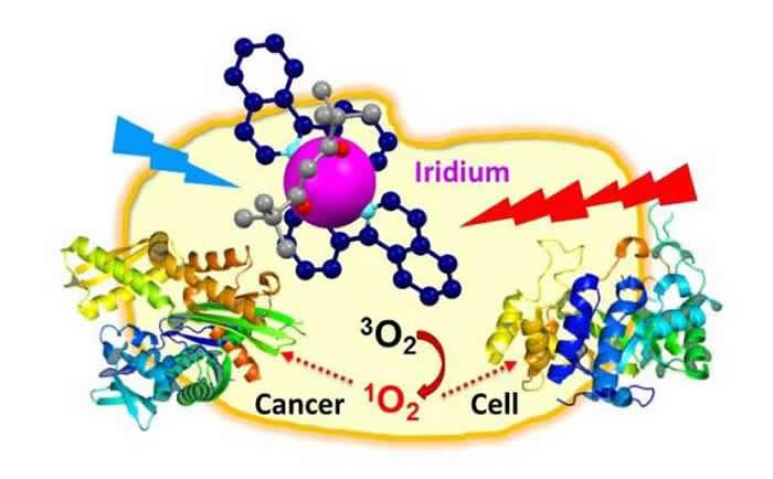 铱通过产生的单线态氧来攻击癌细胞