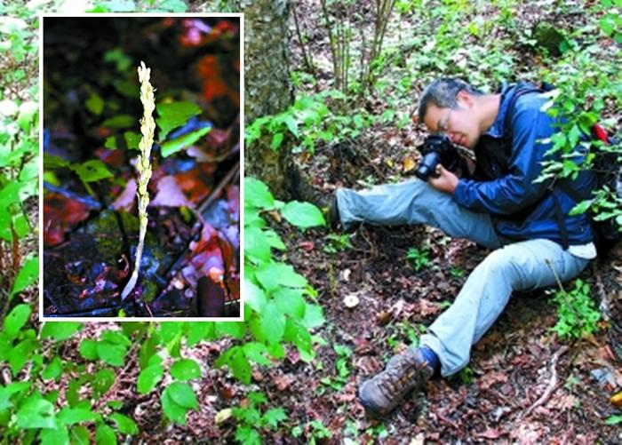 """沐先运在北京发现兰花新品种,并命名为""""北京无喙兰""""。"""
