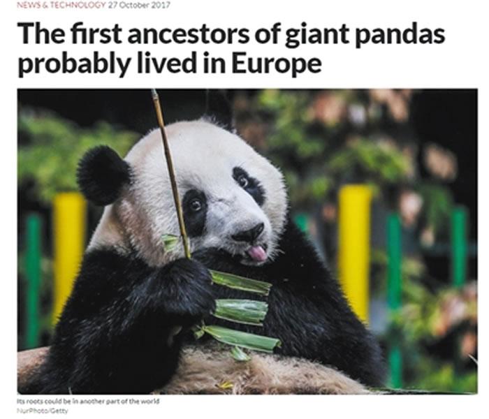 《新科学家》关于匈牙利发现熊猫化石的报道。