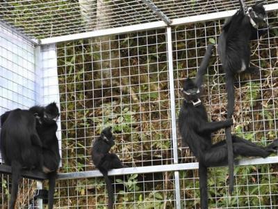 猪交配图_动物世界猴子交配图 - 神秘的地球 科学|自然|地理|探索