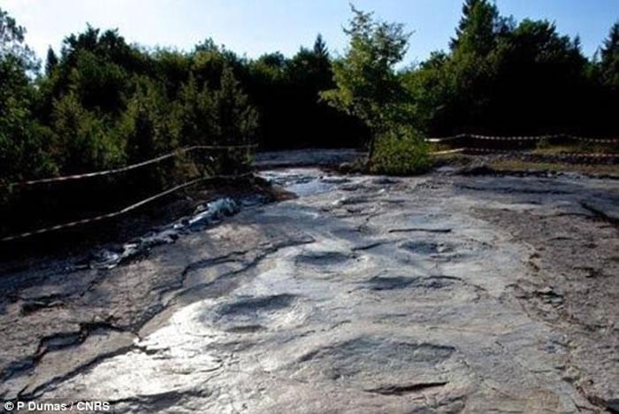 法国发现的世界上最大的蜥脚类恐龙足迹是有史以来最长的恐龙足迹化石的一部分