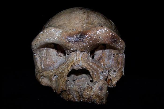 中国陕西发现的大荔人头骨化石研究表明:现代人类或并非全部是非洲祖先的后裔