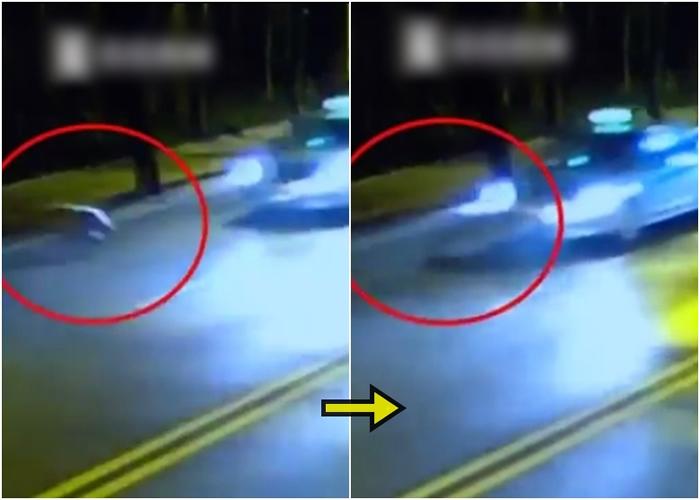野猪突然冲出路面,并被一辆的士撞倒。